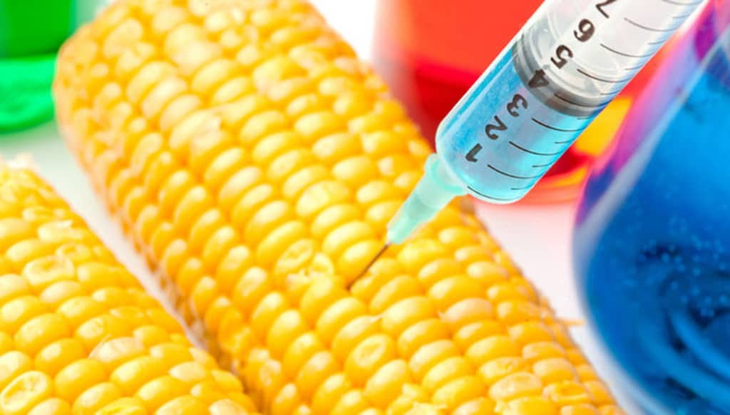 ogm aliment génétiquement modifié
